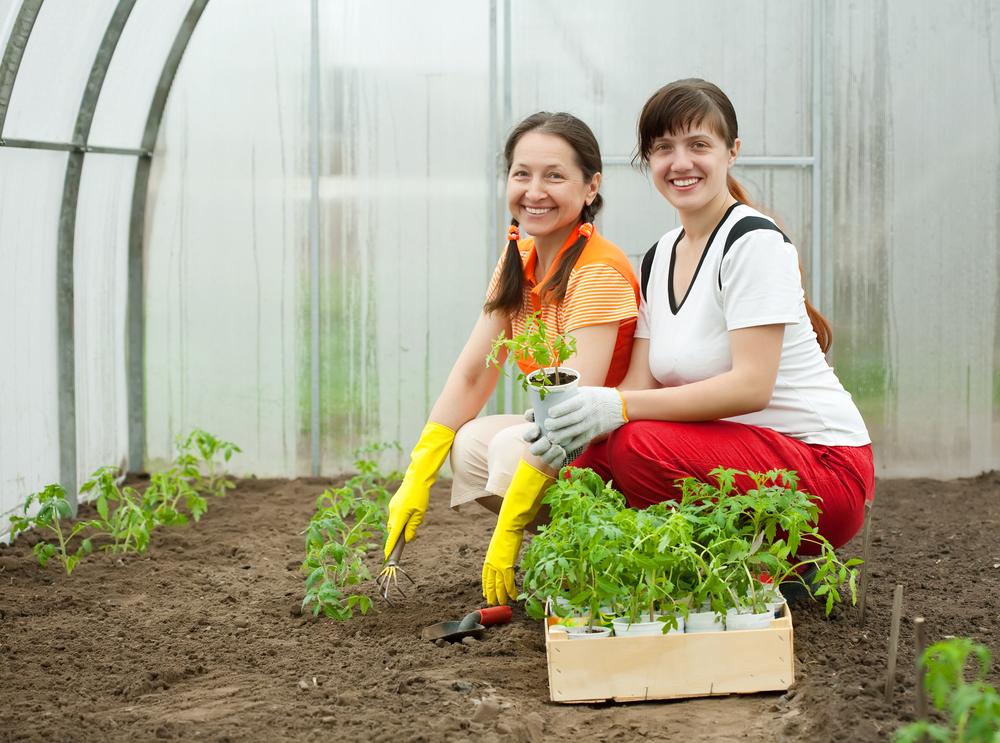 Обогрев теплицы – залог хорошего урожая