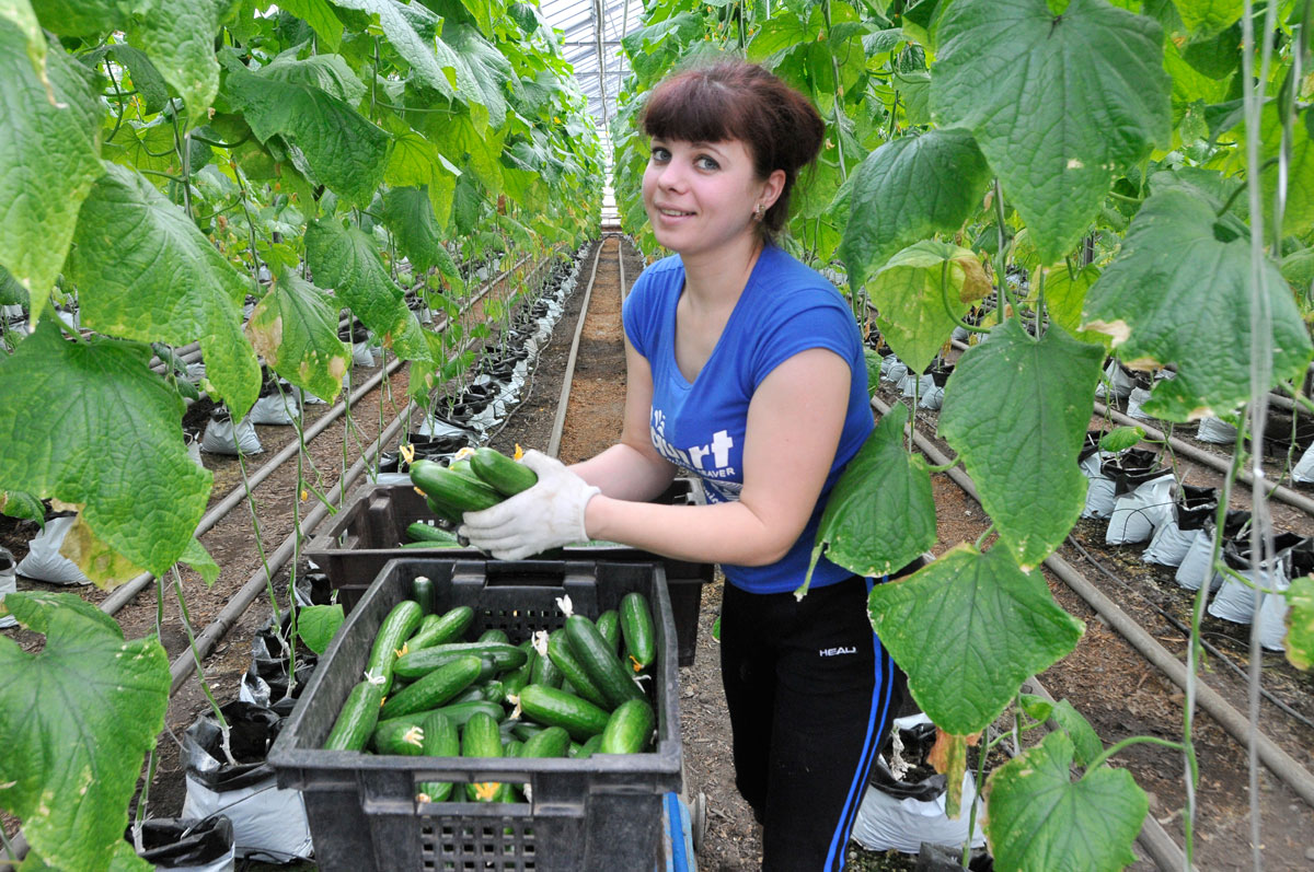 Выращивание урожая 95